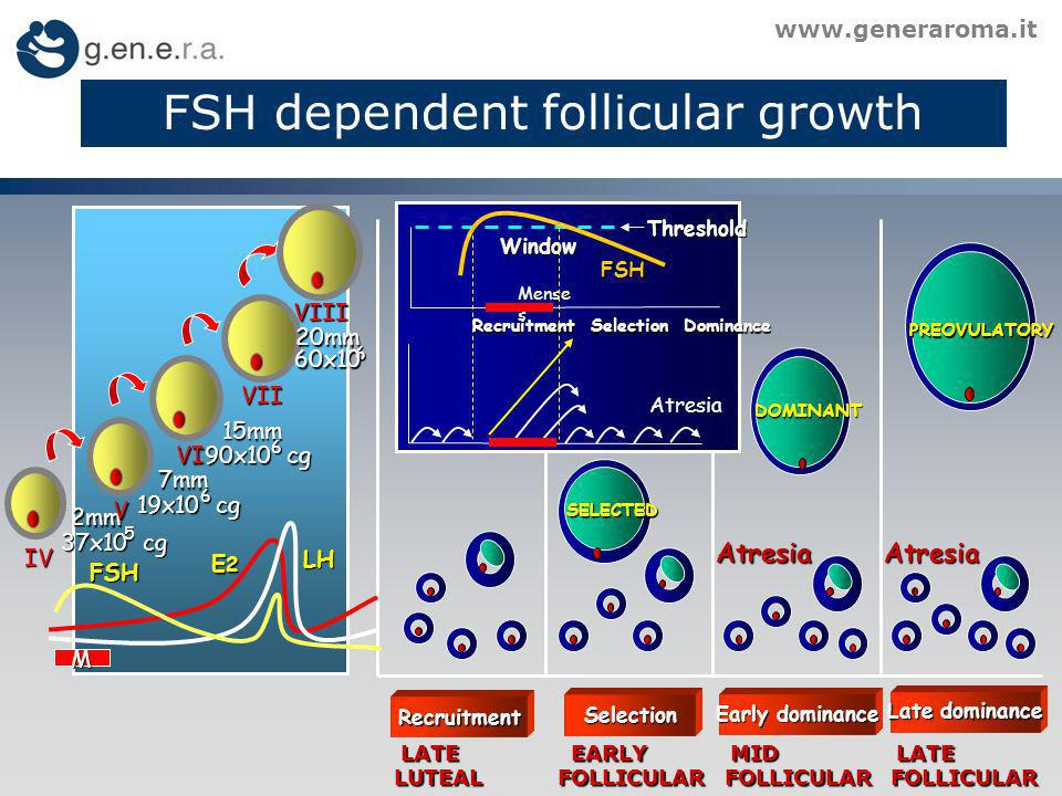 FSH dependent follicular growth www.generaroma.it Recruitment Selection SELECTED LATE EARLY MID LATE LATE EARLY MID LATE LUTEAL FOLLICULAR FOLLICULAR