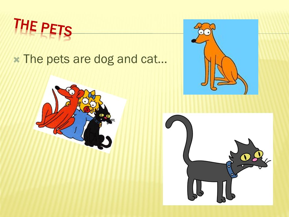 The pets are dog and cat…