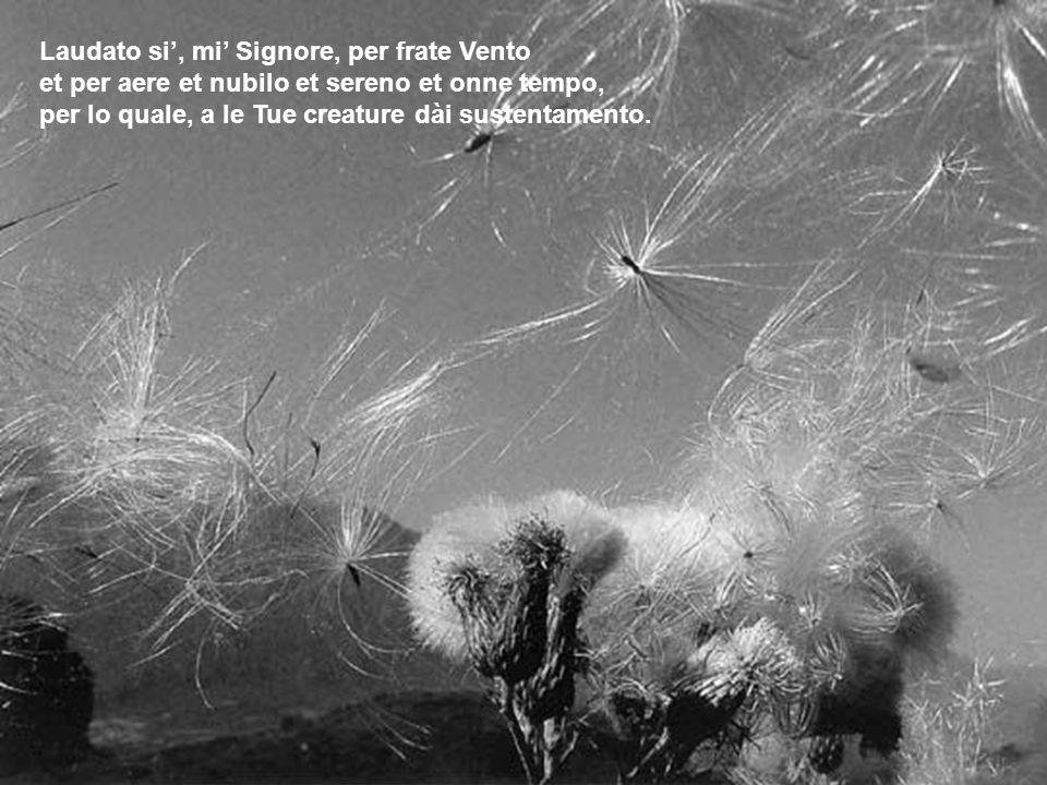 Laudato si, mi Signore, per frate Vento et per aere et nubilo et sereno et onne tempo, per lo quale, a le Tue creature dài sustentamento.