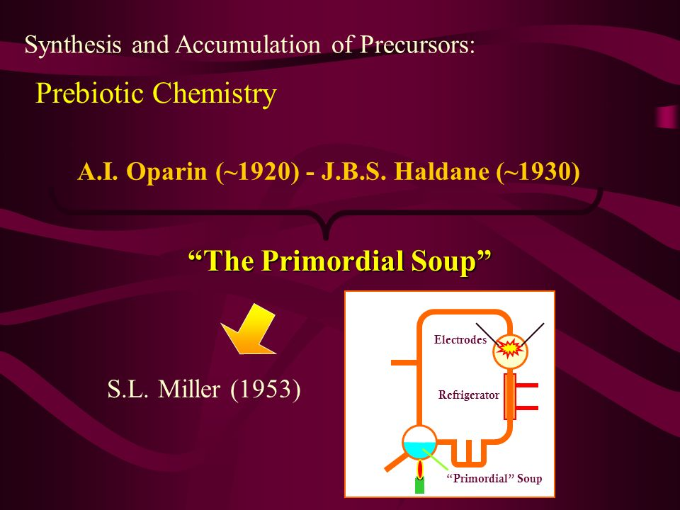 Prebiotic Chemistry Synthesis and Accumulation of Precursors: A.I. Oparin (~1920) - J.B.S. Haldane (~1930) The Primordial Soup S.L. Miller (1953) Prim