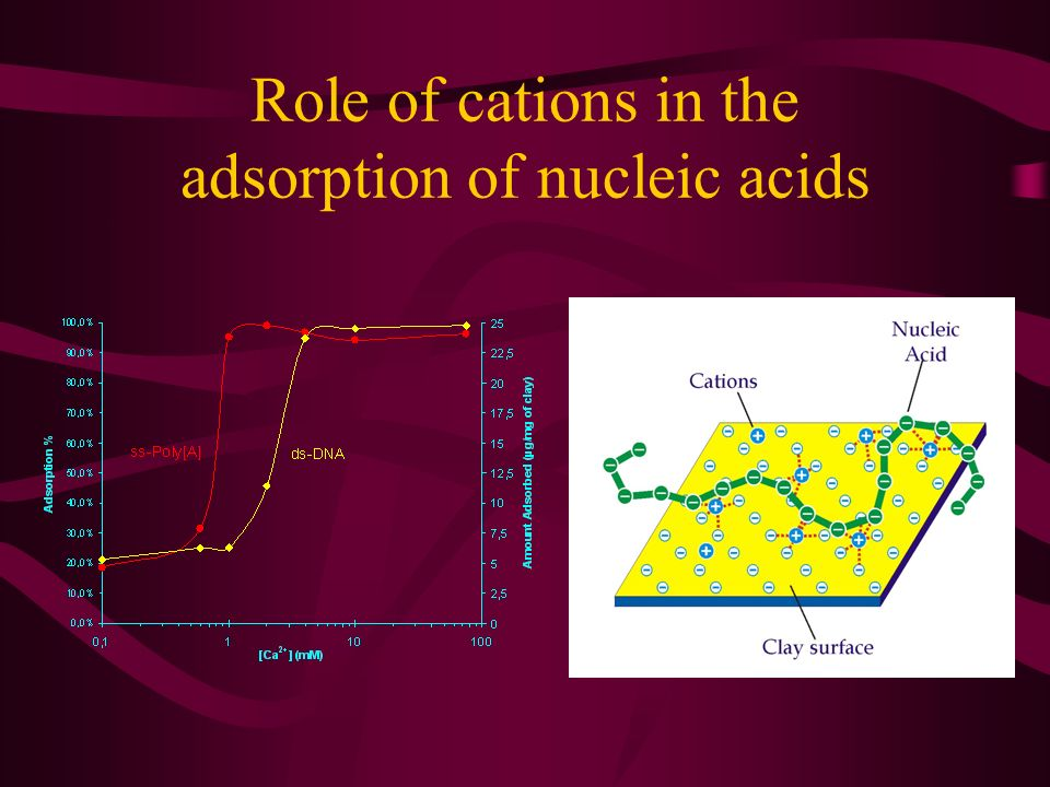 Role of cations in the adsorption of nucleic acids