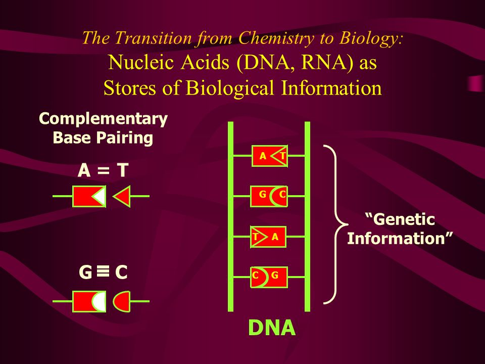 The Transition from Chemistry to Biology: Nucleic Acids (DNA, RNA) as Stores of Biological Information Complementary Base Pairing A = T G C Genetic In