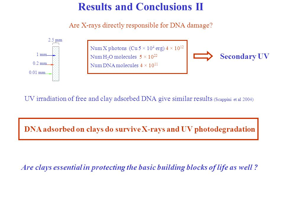 Results and Conclusions II Are X-rays directly responsible for DNA damage.