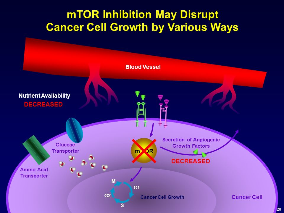 28 mTOR M G1 G2 S Cancer Cell Growth mTOR Inhibition May Disrupt Cancer Cell Growth by Various Ways Glucose Transporter Secretion of Angiogenic Growth