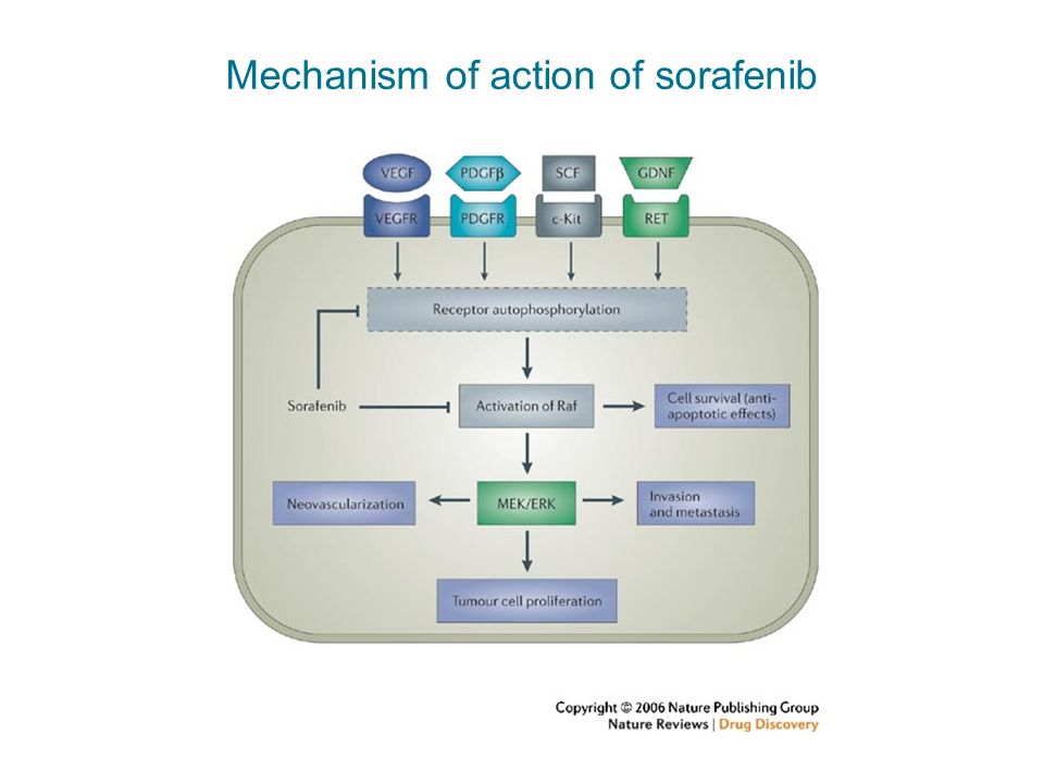 Mechanism of action of sorafenib