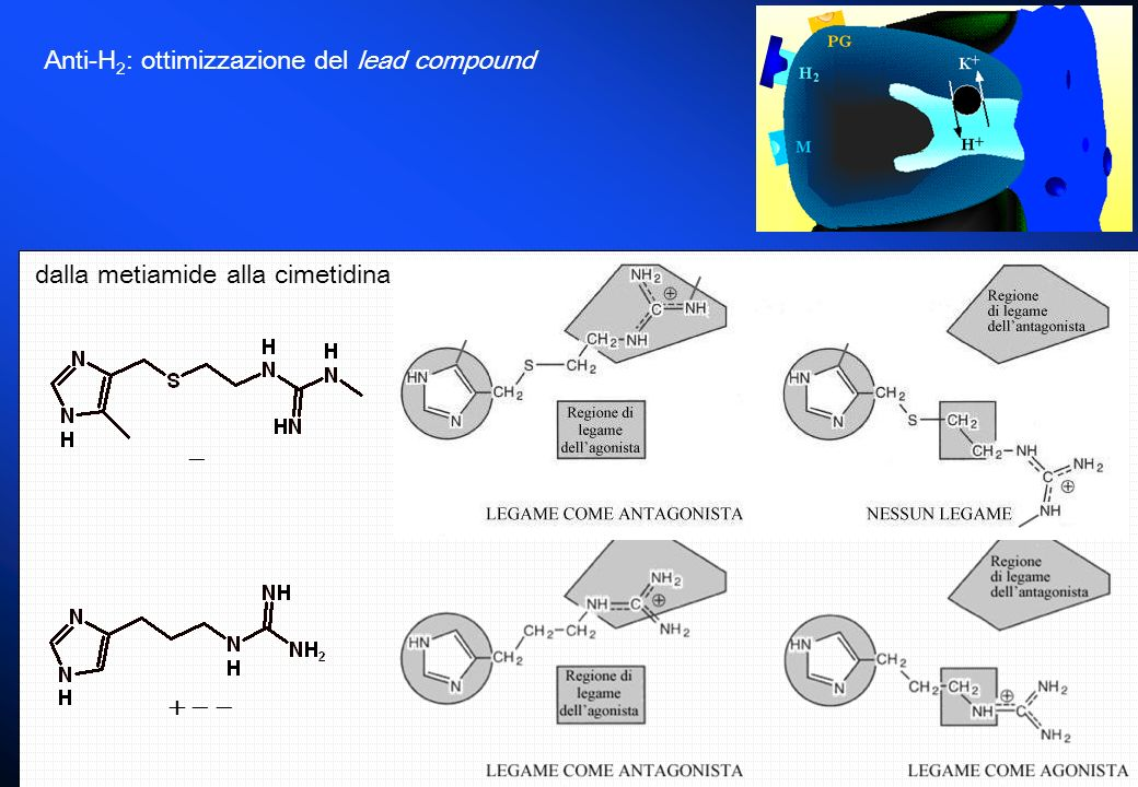 Anti-H 2 : ottimizzazione del lead compound dalla metiamide alla cimetidina