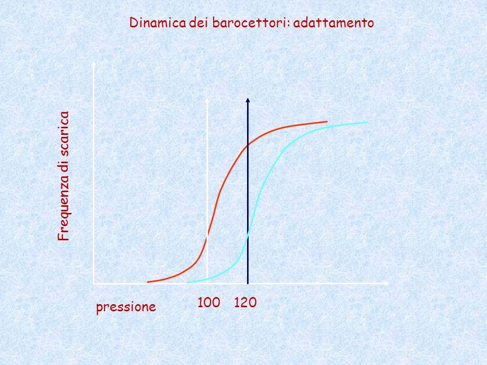 pressione Frequenza di scarica 100 Dinamica dei barocettori: adattamento 120