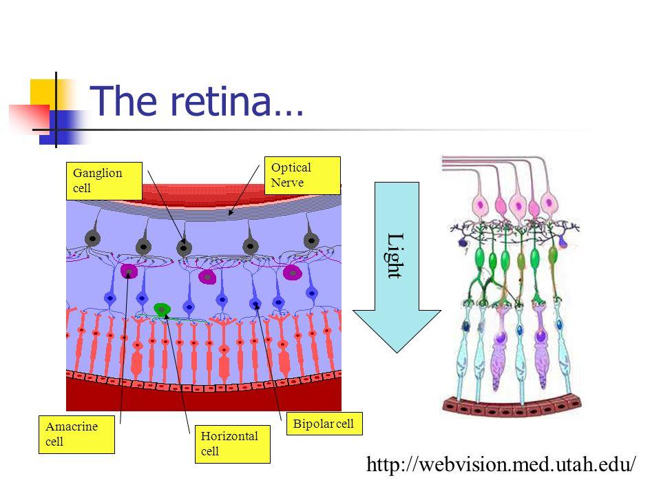 The sensors… Humans Eyelid Iris Lens Retina Optical Nerve Robots Shutter Iris Lens CCD TV Cable