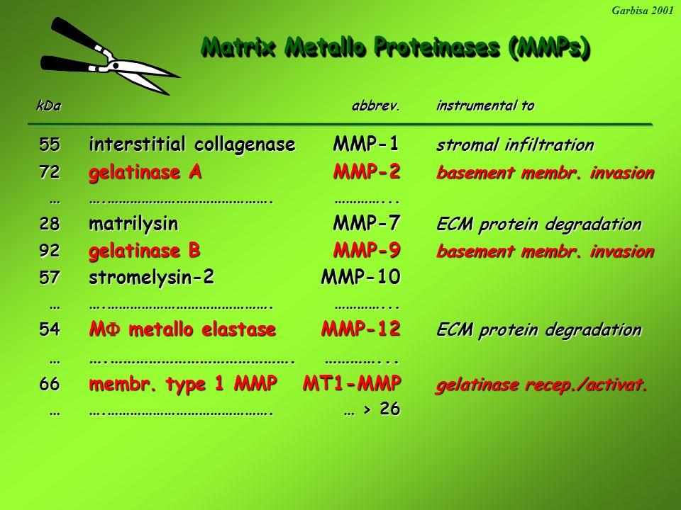 Metallo- Serine- Serine- Cystein- Cystein- Aspartic- Metallo- Serine- Serine- Cystein- Cystein- Aspartic- Proteinases Proteinases Garbisa 2001