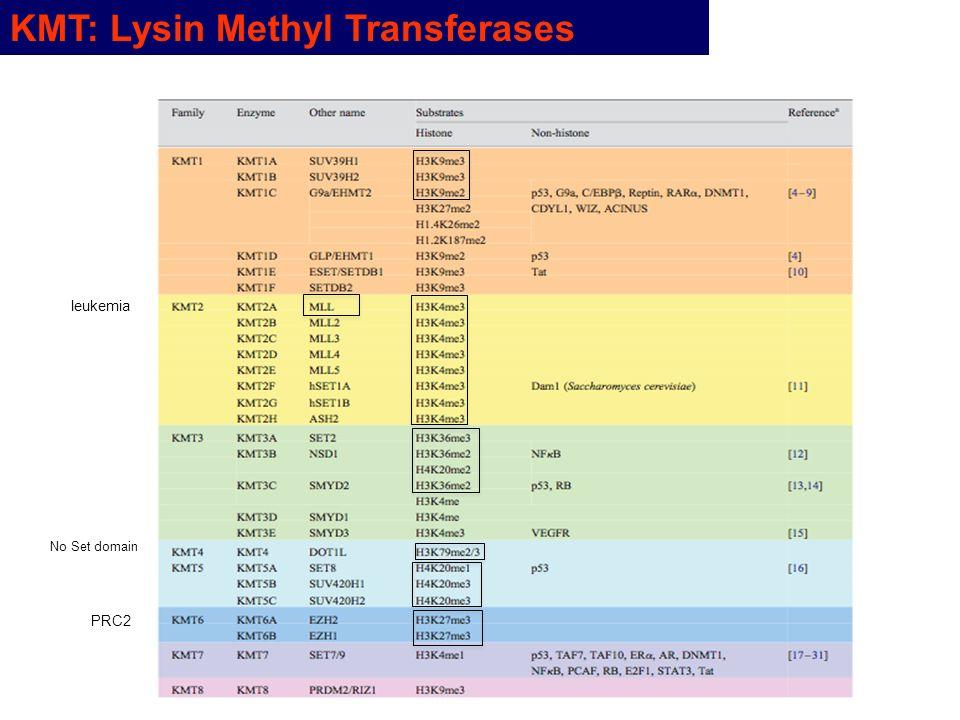 KMT: Lysin Methyl Transferases leukemia PRC2 No Set domain