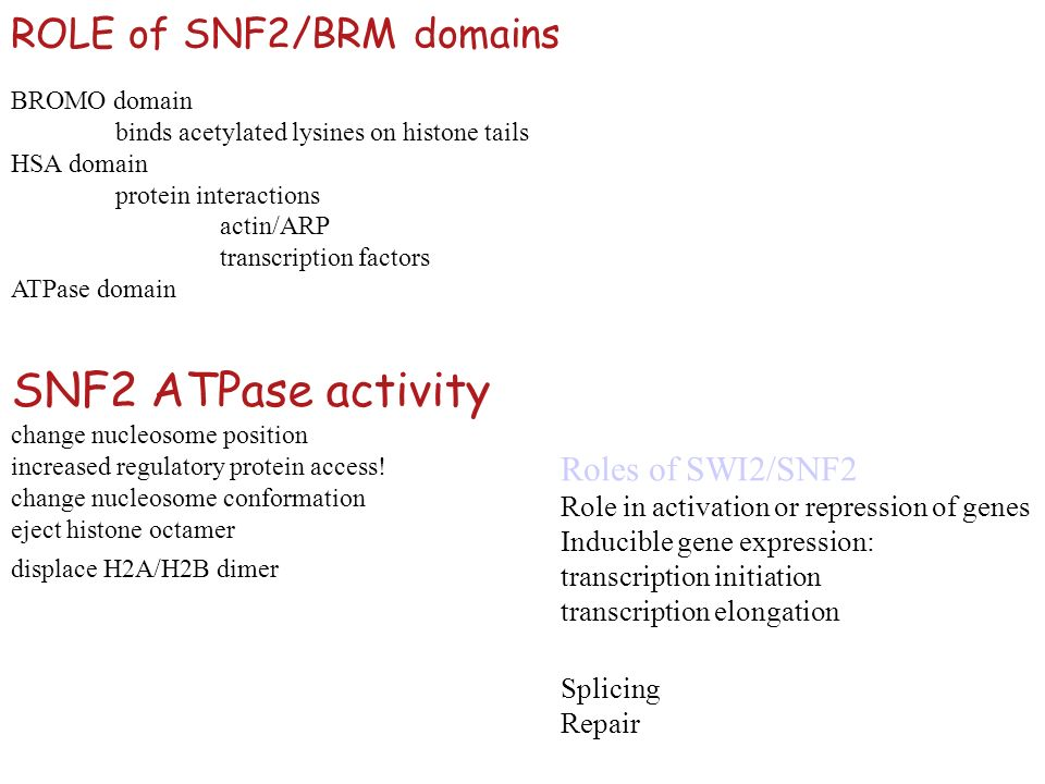 BROMO domain binds acetylated lysines on histone tails HSA domain protein interactions actin/ARP transcription factors ATPase domain ROLE of SNF2/BRM