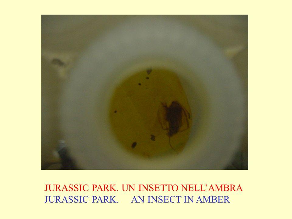 JURASSIC PARK. UN INSETTO NELLAMBRA JURASSIC PARK. AN INSECT IN AMBER