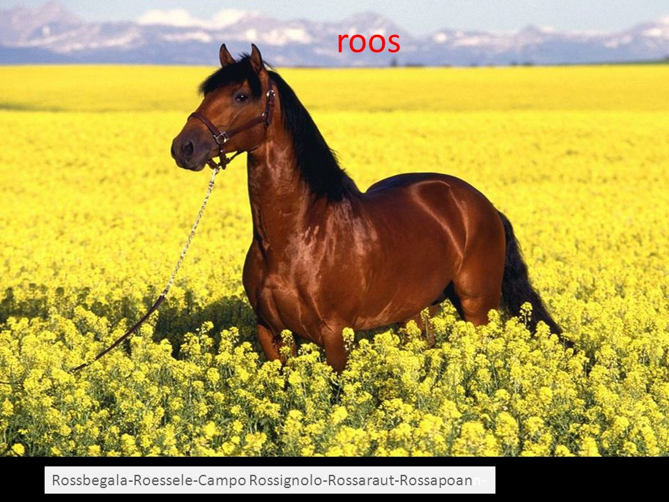 roos Rossbegala-Roessele-Campo Rossignolo-Rossaraut-Rossapoann-