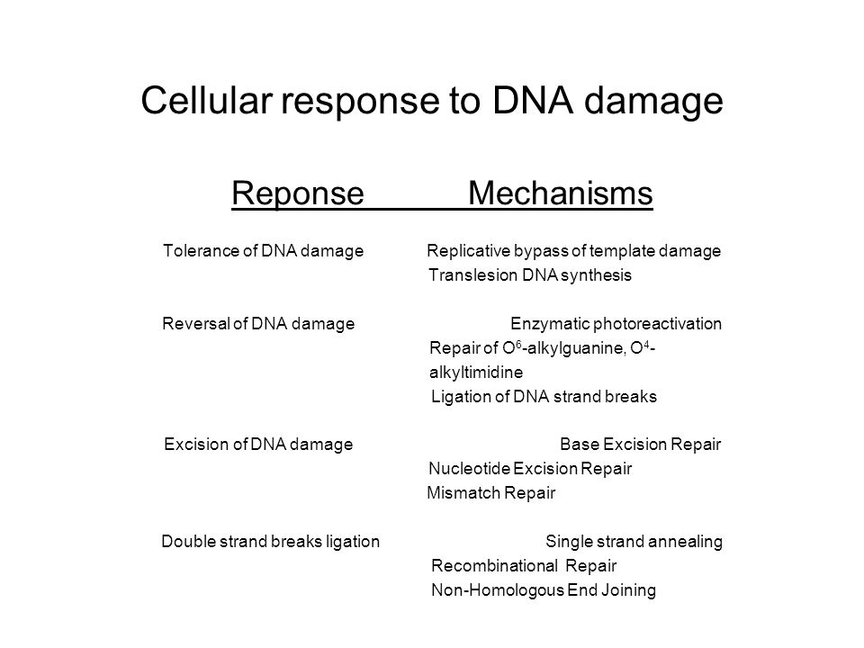 Cellular response to DNA damage Reponse Mechanisms Tolerance of DNA damage Replicative bypass of template damage Translesion DNA synthesis Reversal of DNA damage Enzymatic photoreactivation Repair of O 6 -alkylguanine, O 4 - alkyltimidine Ligation of DNA strand breaks Excision of DNA damage Base Excision Repair Nucleotide Excision Repair Mismatch Repair Double strand breaks ligation Single strand annealing Recombinational Repair Non-Homologous End Joining