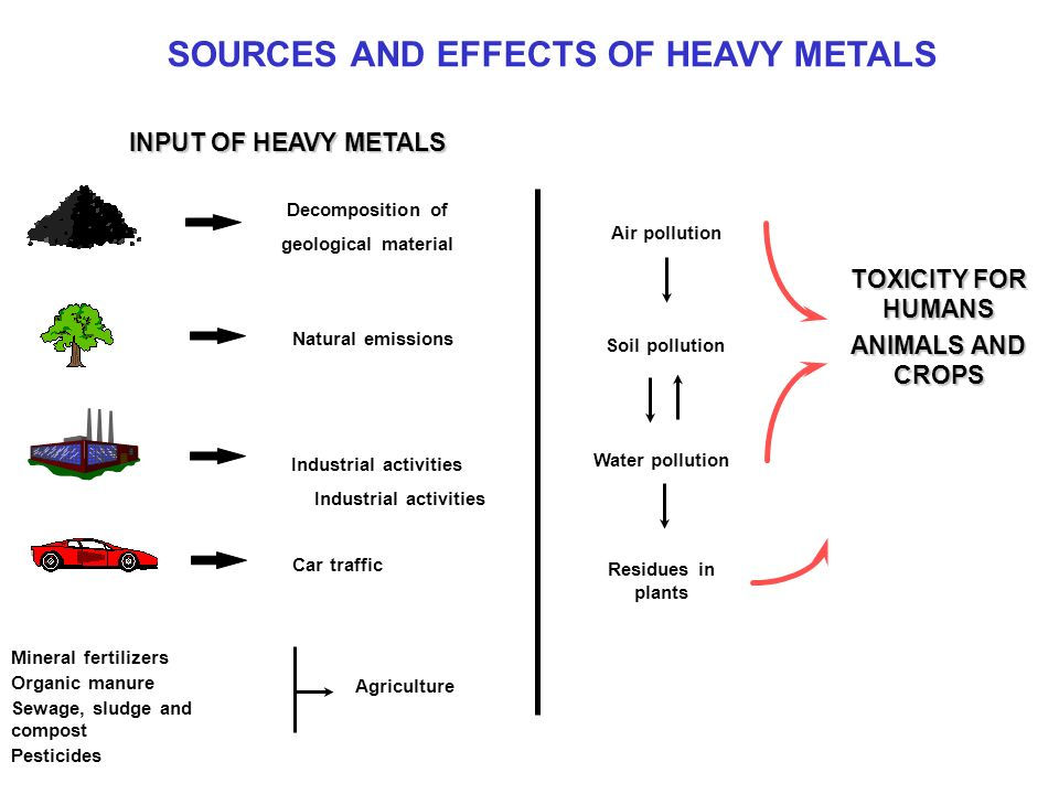 SOURCES AND EFFECTS OF HEAVY METALS INPUT OF HEAVY METALS Decomposition of geological material Natural emissions Industrial activities Car traffic Mineral fertilizers Organic manure Sewage, sludge and compost Pesticides Industrial activities Agriculture TOXICITY FOR HUMANS ANIMALS AND CROPS Air pollution Soil pollution Water pollution Residues in plants