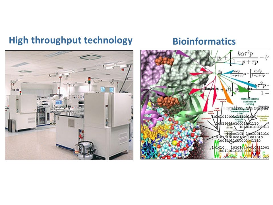 High throughput technology Bioinformatics