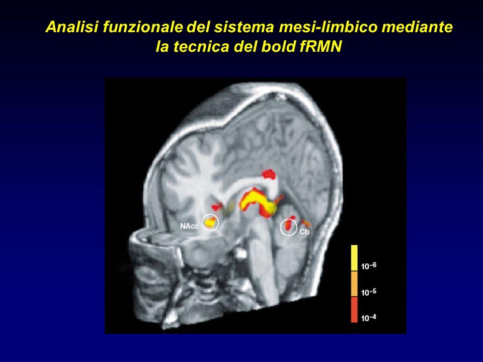 Analisi funzionale del sistema mesi-limbico mediante la tecnica del bold fRMN