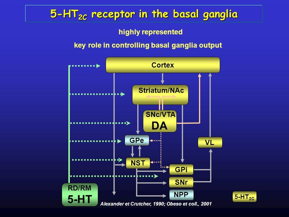 5-HT 2C receptor in the basal ganglia highly represented Cortex GPe NST GPi SNr NPP VL Striatum/NAc SNc/VTA DA RD/RM 5-HT Alexander et Crutcher, 1990;
