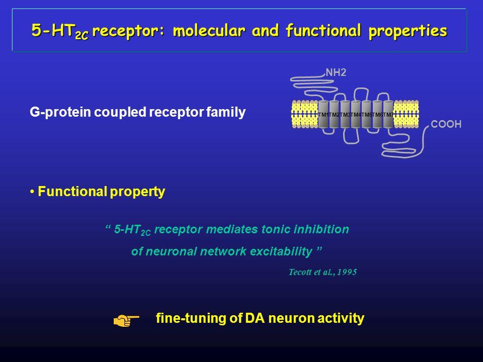 COOH TM1TM2TM3TM4TM5TM6TM7 NH2 Tecott et al., 1995 Functional property 5-HT 2C receptor mediates tonic inhibition of neuronal network excitability fin