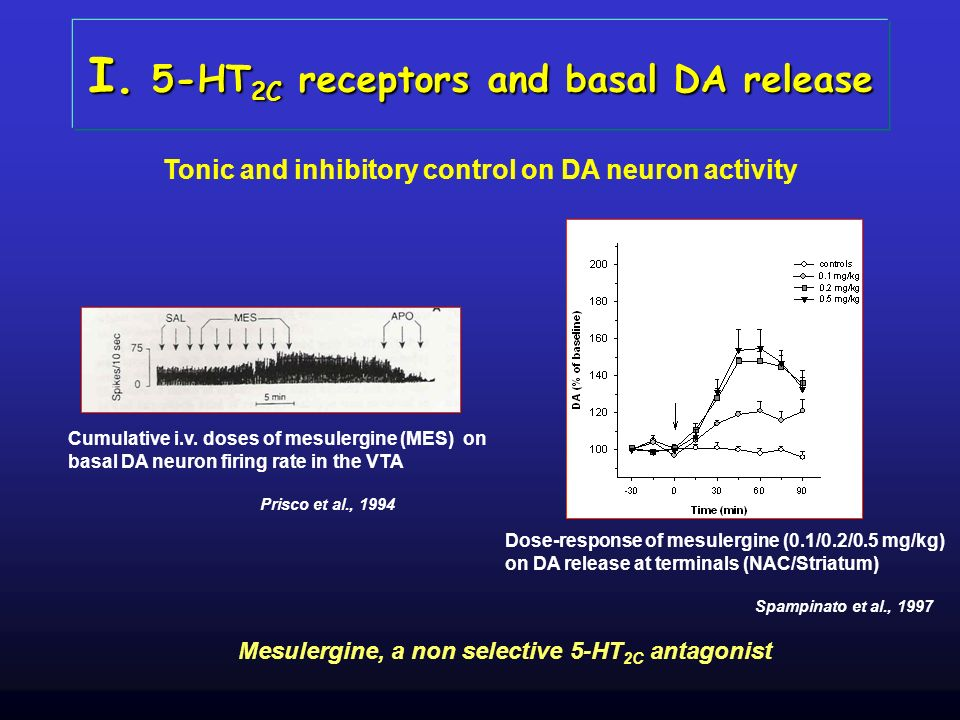 I. 5-HT 2C receptors and basal DA release Mesulergine, a non selective 5-HT 2C antagonist Tonic and inhibitory control on DA neuron activity Cumulativ