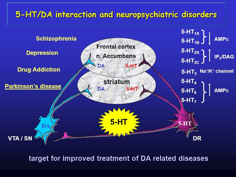 DA VTA / SNDR 5-HT DA Frontal cortex n. Accumbens striatum DA 5-HT 5-HT 3 Na + /K + channel 5-HT 1A 5-HT 1B AMPc 5-HT 4 5-HT 6 5-HT 7 AMPc 5-HT 2A 5-H