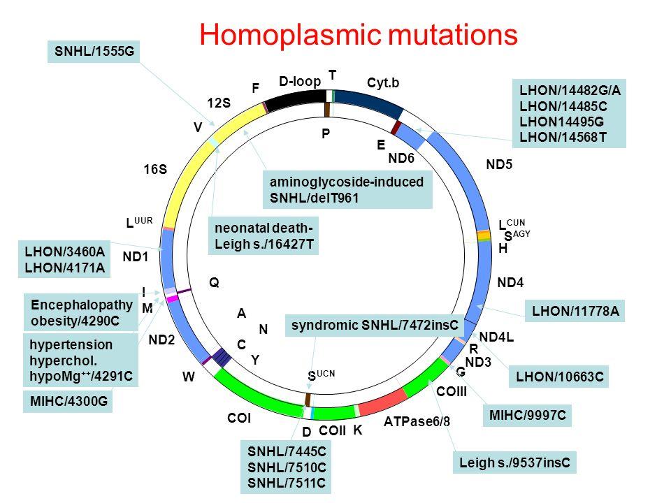 SNHL/1555G LHON/14482G/A LHON/14485C LHON14495G LHON/14568T LHON/11778A LHON/3460A LHON/4171A LHON/10663C Homoplasmic mutations syndromic SNHL/7472ins