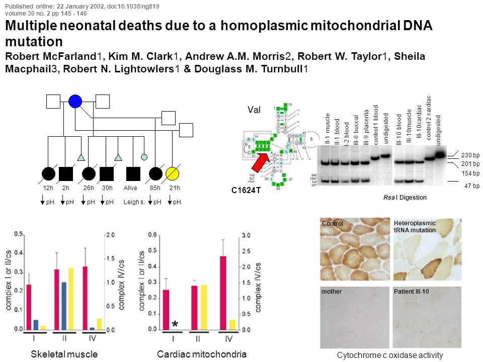Published online: 22 January 2002, doi:10.1038/ng819 volume 30 no. 2 pp 145 - 146 Multiple neonatal deaths due to a homoplasmic mitochondrial DNA muta