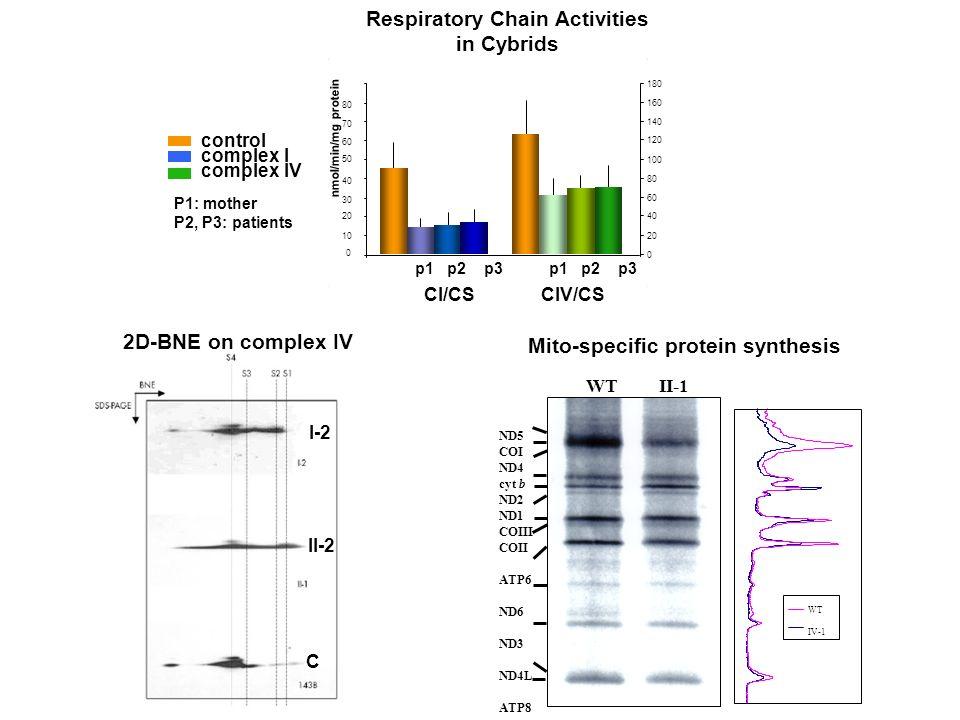 control complex I complex IV Respiratory Chain Activities in Cybrids nmol/min/mg protein p1 p2 p3 CI/CS CIV/CS 0 10 20 30 40 50 60 70 80 0 20 40 60 80