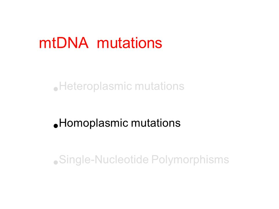 homoplasmic mother her offspring (usually) healthy (usually) sick Mutation is necessary but not sufficient to produce the disease phenotype Homoplasmic point mutation eg, LHON mitochondrial bottleneck mitochondrial proliferation her oogonia