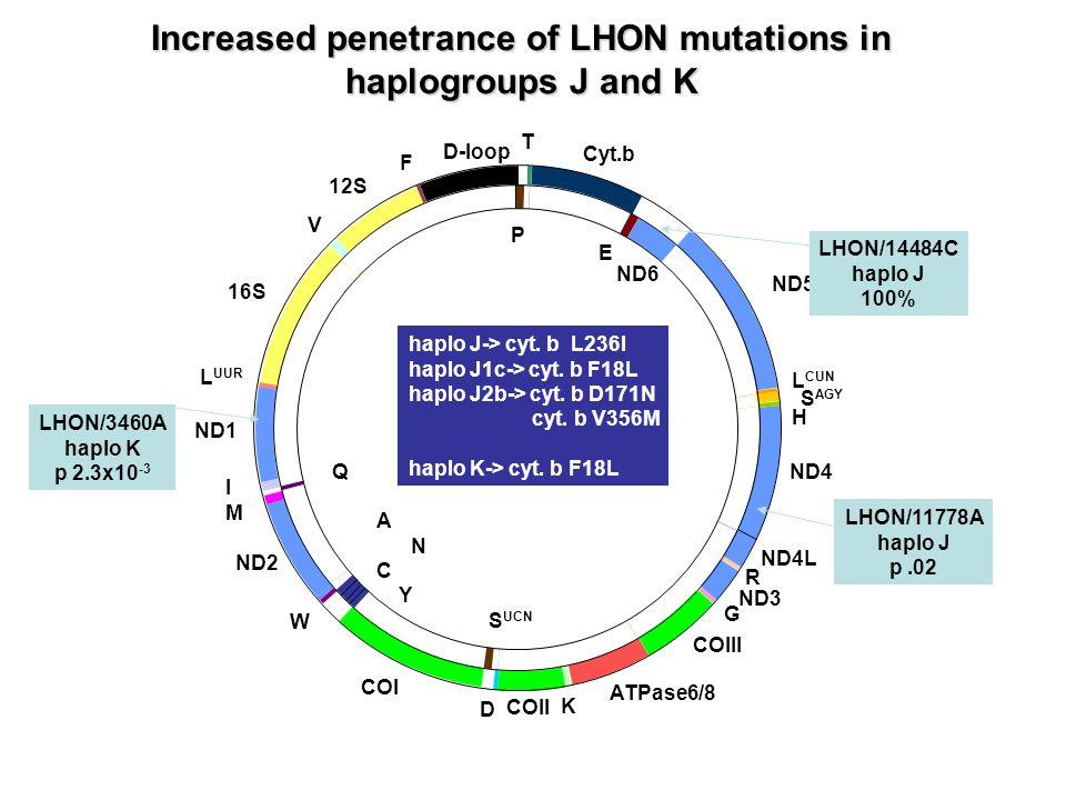 LHON/14484C haplo J 100% LHON/11778A haplo J p.02 LHON/3460A haplo K p 2.3x10 -3 haplo J-> cyt. b L236I haplo J1c-> cyt. b F18L haplo J2b-> cyt. b D17