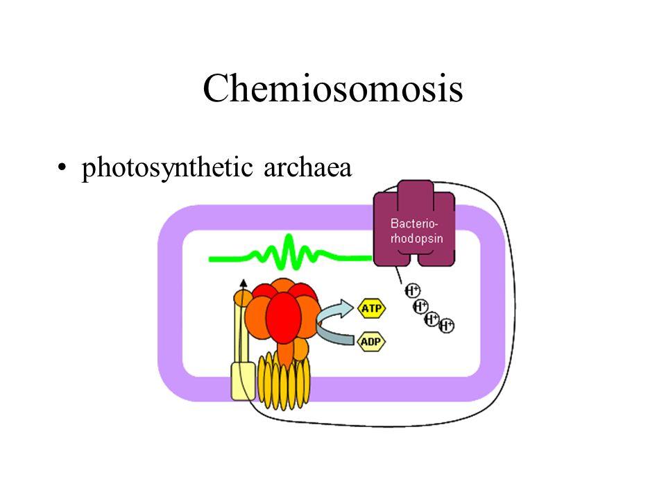 Chemiosomosis photosynthetic archaea