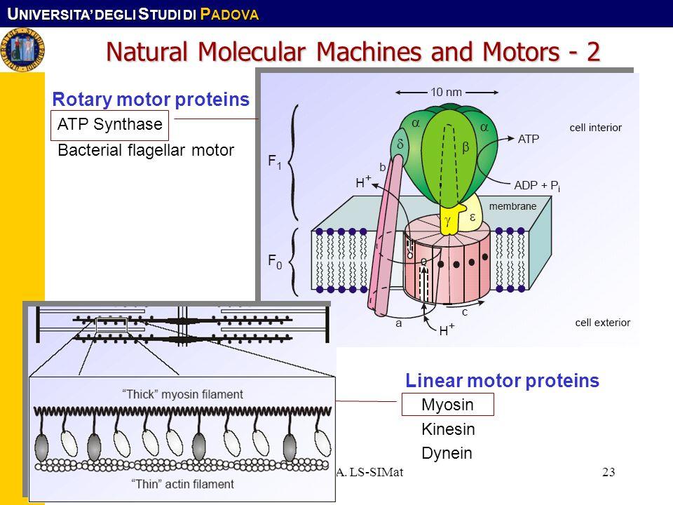 U NIVERSITA DEGLI S TUDI DI P ADOVA Corso CFMA. LS-SIMat23 Natural Molecular Machines and Motors - 2 Rotary motor proteins ATP Synthase Bacterial flag