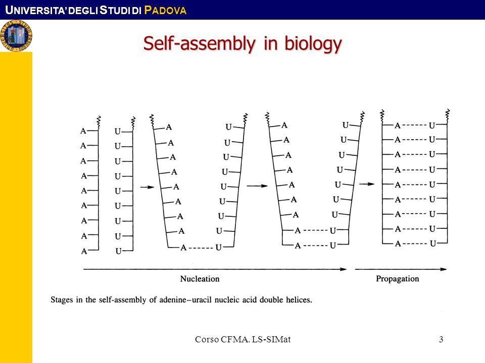 U NIVERSITA DEGLI S TUDI DI P ADOVA Corso CFMA. LS-SIMat3 Self-assembly in biology