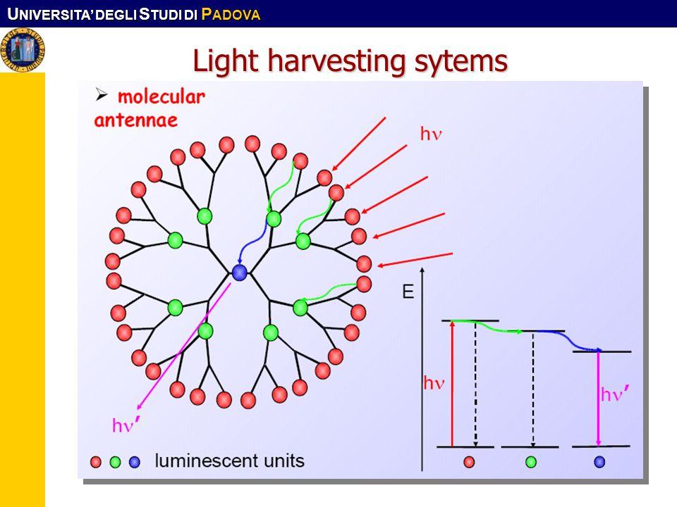 U NIVERSITA DEGLI S TUDI DI P ADOVA Corso CFMA. LS-SIMat10 Light harvesting sytems