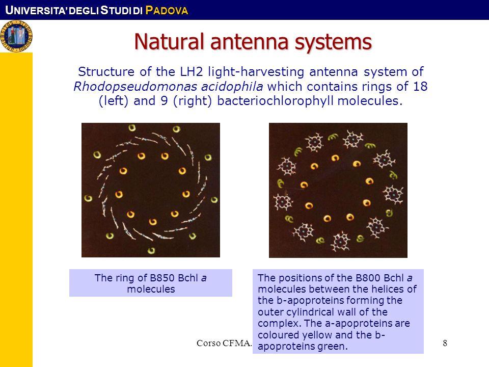 U NIVERSITA DEGLI S TUDI DI P ADOVA Corso CFMA. LS-SIMat8 Natural antenna systems Structure of the LH2 light-harvesting antenna system of Rhodopseudom
