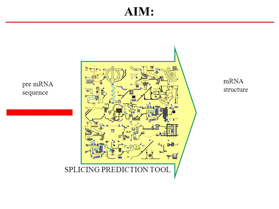 AIM: SPLICING PREDICTION TOOL pre mRNA sequence mRNA structure