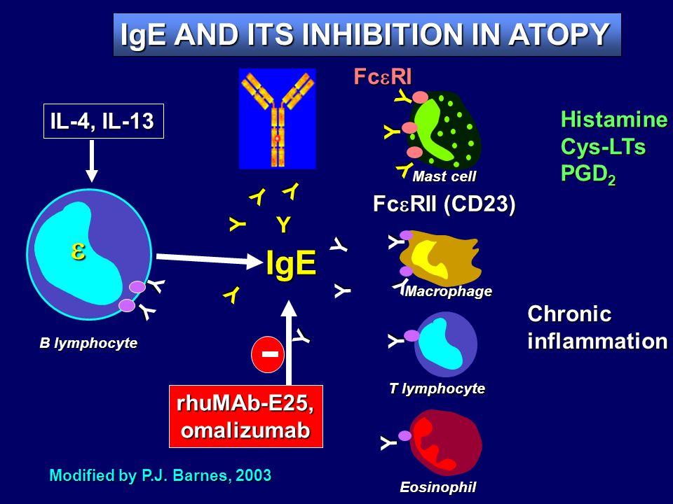 Y Y IgE Y Y Y IL-4, IL-13 B lymphocyte Y Y Y HistamineCys-LTs PGD 2 Fc RI Mast cell Y Y Y Y Y Y Y Chronicinflammation Y Y Fc RII (CD23) Macrophage T l
