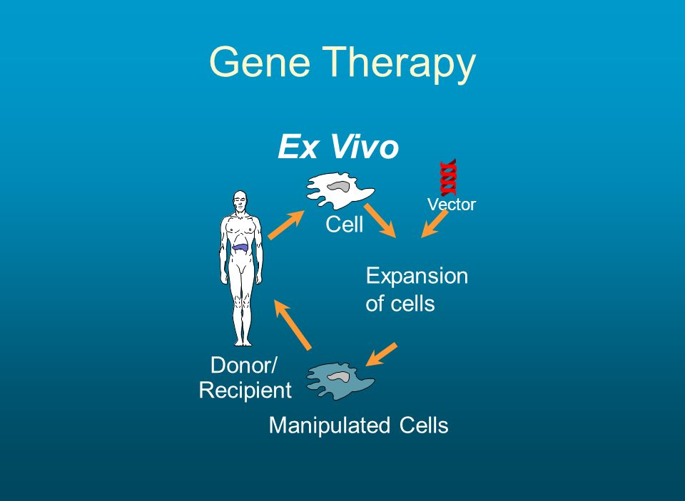 Gene Therapy Ex Vivo Donor/ Recipient Cell Vector Manipulated Cells Expansion of cells