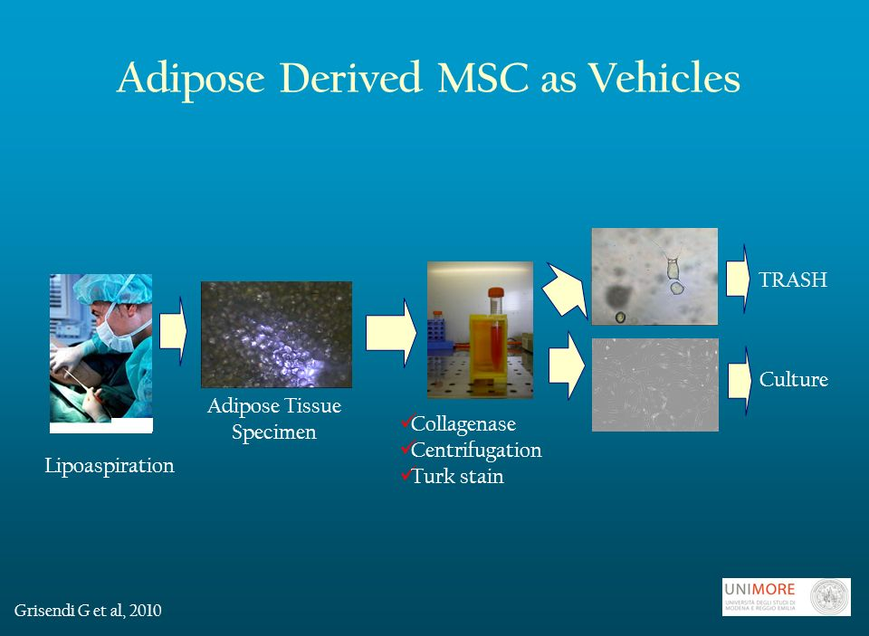 Adipose Derived MSC as Vehicles Collagenase Centrifugation Turk stain Culture Adipose Tissue Specimen TRASH Lipoaspiration Grisendi G et al, 2010