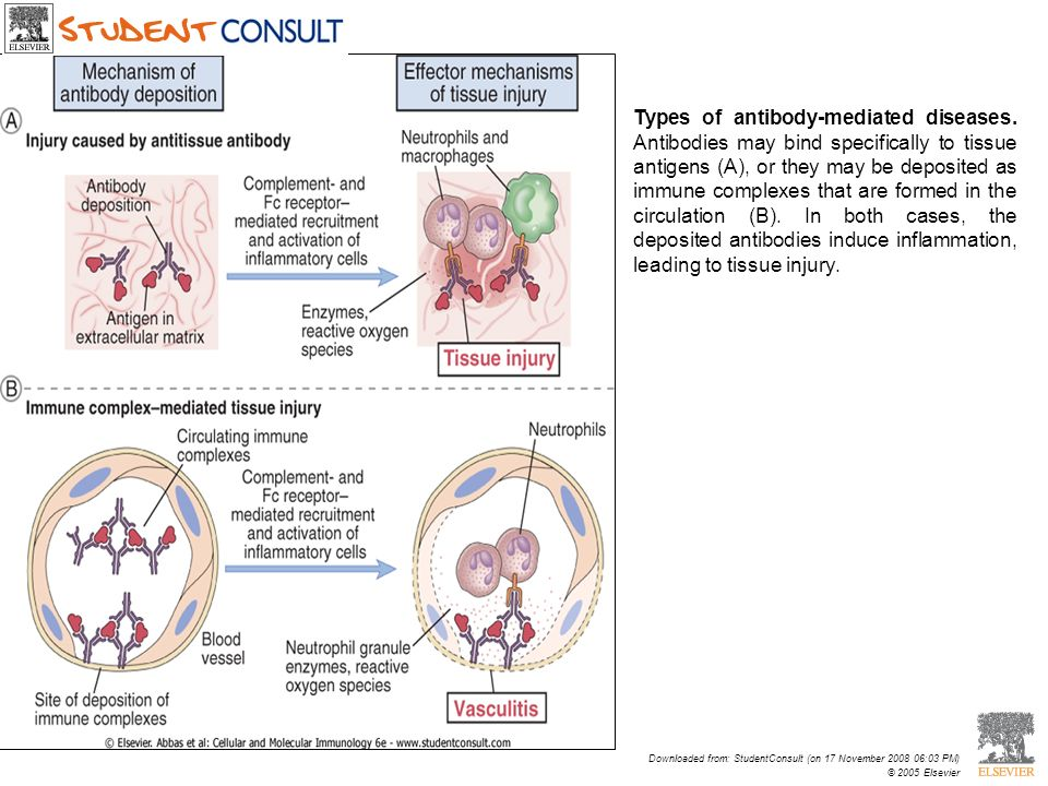Downloaded from: StudentConsult (on 17 November 2008 06:03 PM) © 2005 Elsevier Types of antibody-mediated diseases. Antibodies may bind specifically t