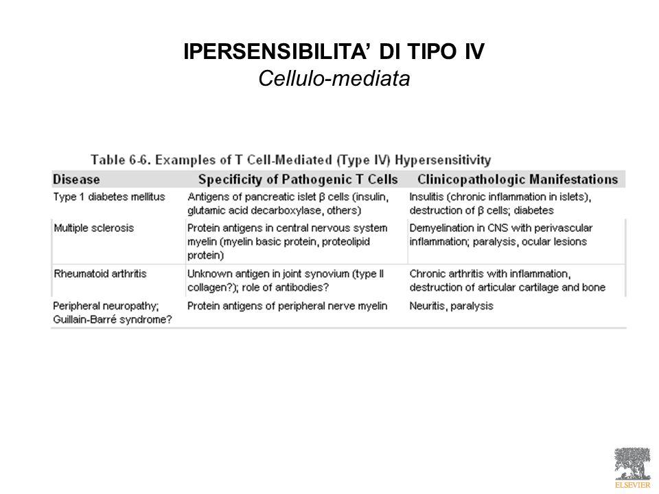 IPERSENSIBILITA DI TIPO IV Cellulo-mediata