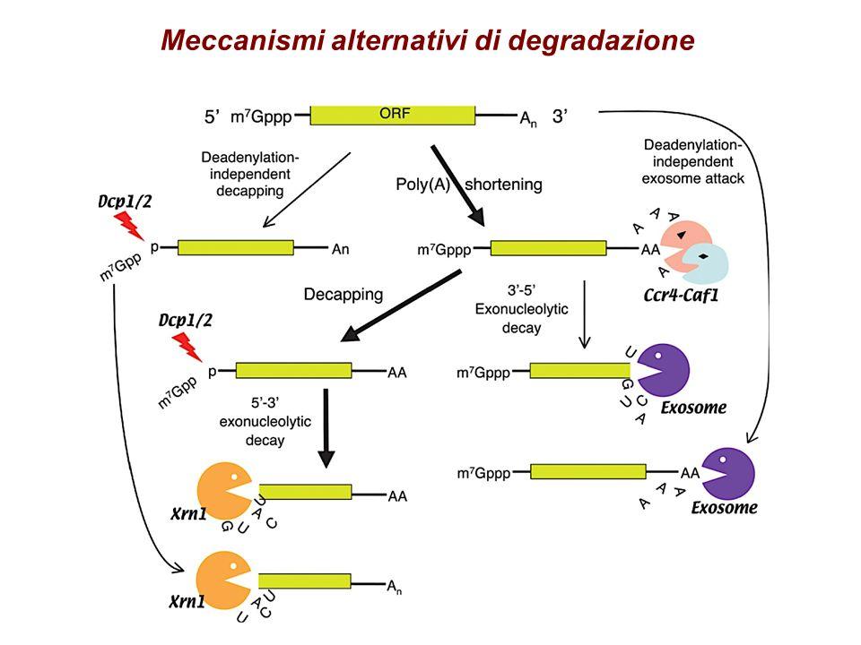 Meccanismi alternativi di degradazione