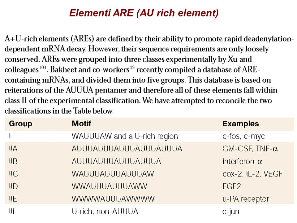 Elementi ARE (AU rich element)