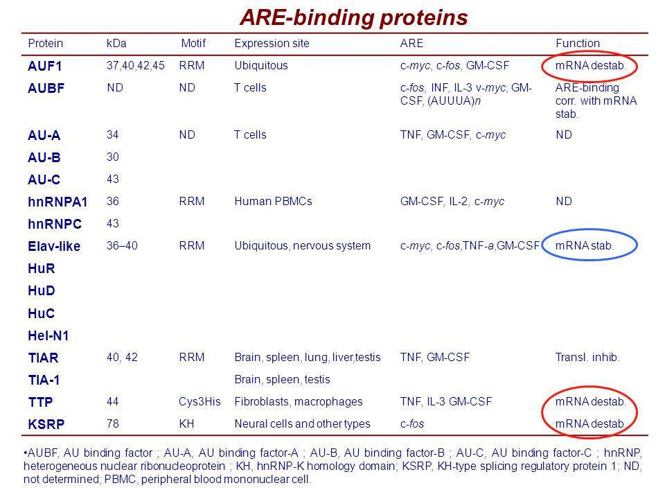 ARE-binding proteins ProteinkDa MotifExpression siteAREFunction AUF1 37,40,42,45RRMUbiquitousc-myc, c-fos, GM-CSFmRNA destab.