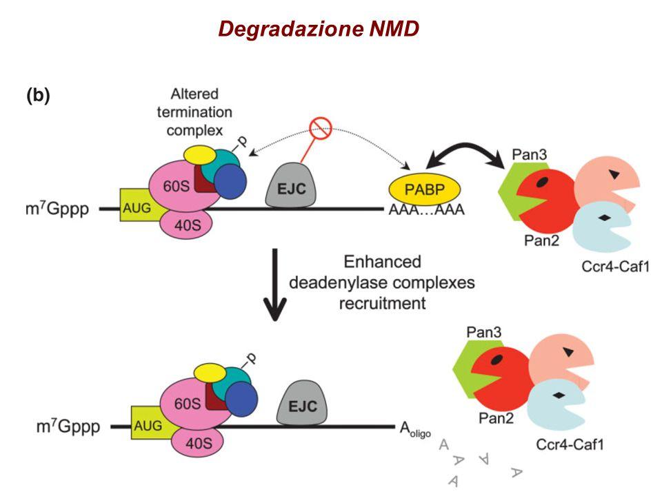 Degradazione NMD