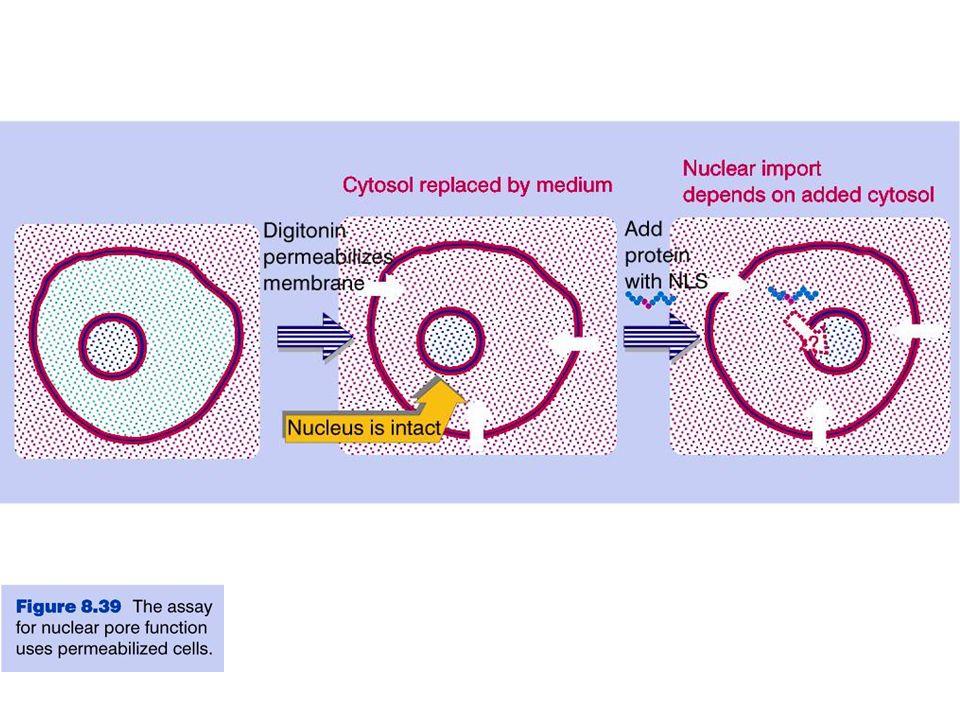 Fattori che influenzano la stabilità dell mRNA