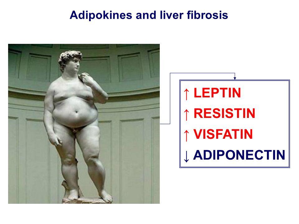 LEPTIN RESISTIN VISFATIN ADIPONECTIN Adipokines and liver fibrosis