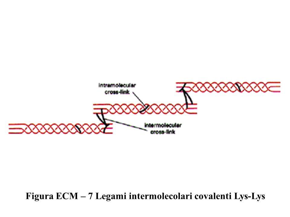 Figura ECM – 7 Legami intermolecolari covalenti Lys-Lys