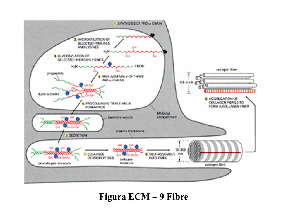 Figura ECM – 9 Fibre
