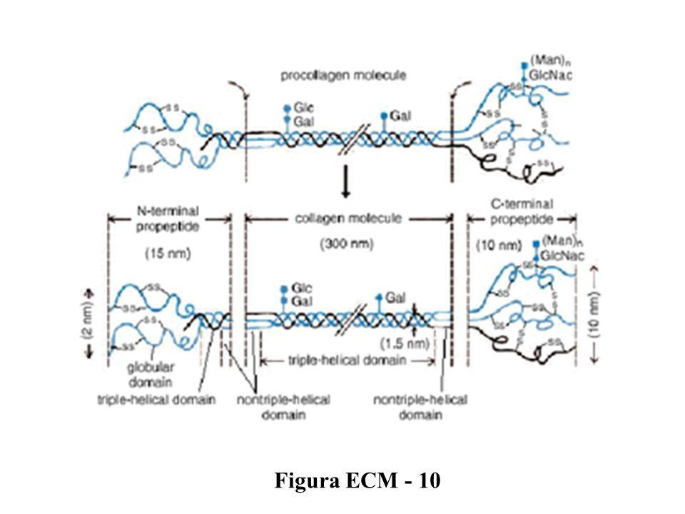 Figura ECM - 10